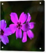 Purple Acrylic Print