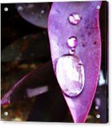 Purple Leaf Acrylic Print