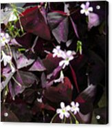 Purple Leaves With Tiny Pink Flowers Acrylic Print