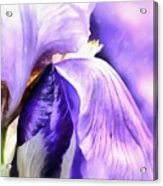 Purple Life Acrylic Print