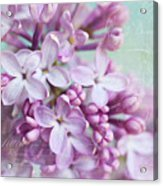 Purple Lilacs With Text Acrylic Print
