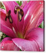 Purple Lilly In A Flower Bouquet Extreme Close-up Acrylic Print
