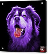Purple Malamute Dog Art - 6536 - Bb Acrylic Print