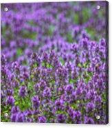 Purple Meadow 3 Acrylic Print