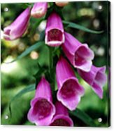 Purple Mouth Flowers Acrylic Print