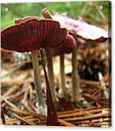 Purple Mushroom 2 Acrylic Print
