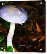 Purple Mushroom Russula Cyanoxantha Acrylic Print