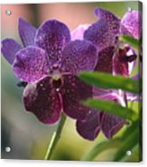 Purple Orchid Beauty Acrylic Print