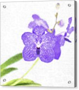 Purple Orchid Bloom Acrylic Print