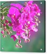 Purple Orchid Branch Acrylic Print