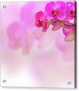 Purple Orchid Flower On Blur Background Acrylic Print