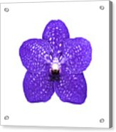 Purple Orchid On White Acrylic Print