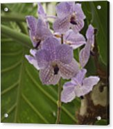 Purple Orchids 2 Acrylic Print
