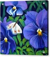 Purple Pansies And White Moth Acrylic Print