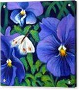 Purple Pansies And White Moth Acrylic Print