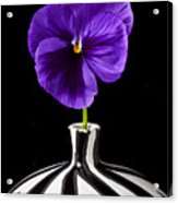 Purple Pansy Acrylic Print by Garry Gay