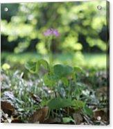 Purple Persists Acrylic Print
