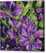 Purple Persuasion Acrylic Print