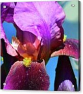 Purple Petals Four  Acrylic Print