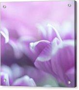 Purple Petals. Gentle Floral Macro Acrylic Print