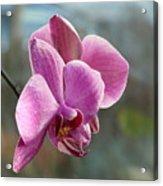 Purple Phalaenopsis Orchid Acrylic Print