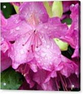 Purple Pink Horizontal Acrylic Print