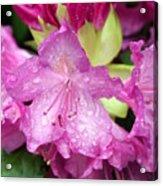 Purple Pink Acrylic Print