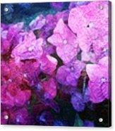 Purple Pink Painterliness Acrylic Print