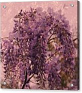 Purple Pleasures Acrylic Print