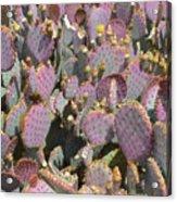 Purple Prickly Pear 3 Acrylic Print