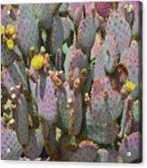 Purple Prickly Pear 1 Acrylic Print