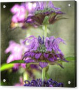 Purple Promises Acrylic Print
