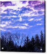 Purple Puffs Acrylic Print