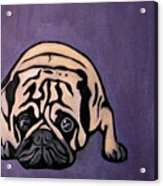 Purple Pug Acrylic Print