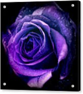 Purple Role Acrylic Print