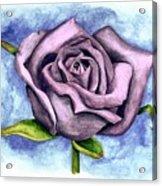 Purple Rose Acrylic Print by Robert Morin