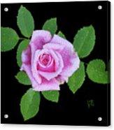 Purple Rosebud2 Cutout Acrylic Print
