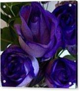 Purple Roses Ll Acrylic Print by Marsha Heiken