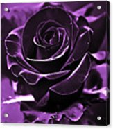 Purple Seduction Acrylic Print