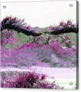 Purple Sensation Acrylic Print