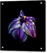 Purple Siberian Iris Flower Neon Abstract Acrylic Print