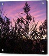 Purple Silhouette  Acrylic Print