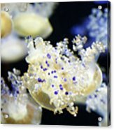 Purple Spotted Jellyfish  Acrylic Print