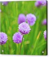 Purple Spring 14 Acrylic Print