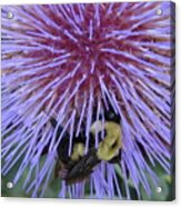 Purple Star Burst Acrylic Print