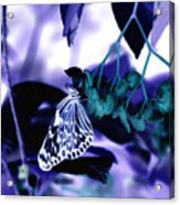 Purple Teal And A White Butterfly Acrylic Print