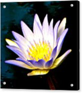 Purple Tipped Water Lily Acrylic Print