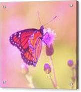 Purple Touch Acrylic Print