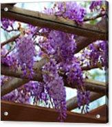 Purple Trellis Acrylic Print
