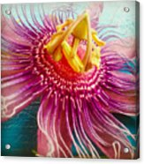 Purple Tropic Acrylic Print